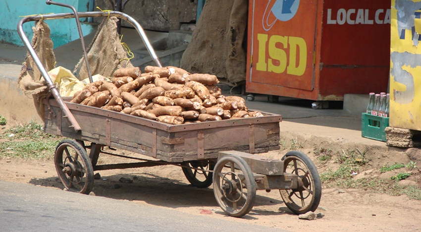 on the way from periyar, sweet potatoes