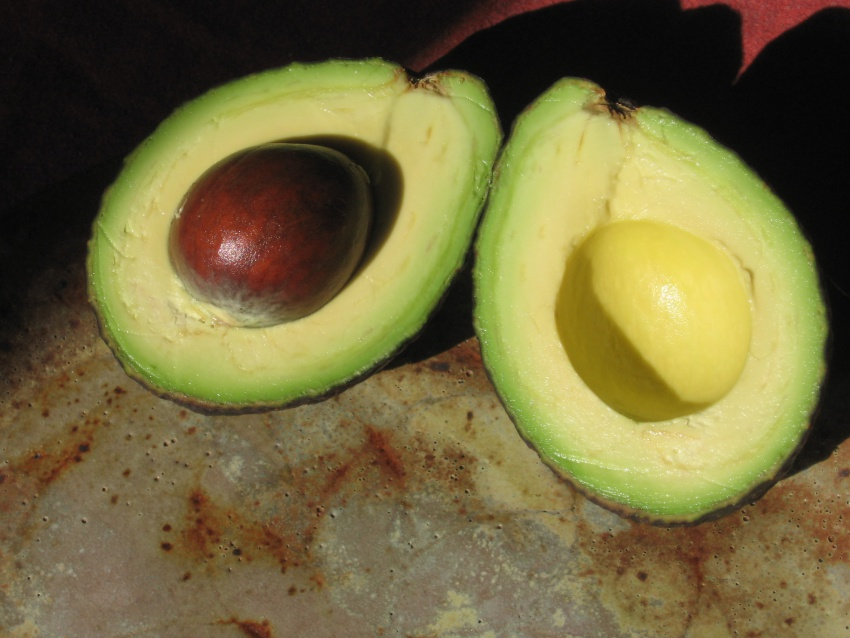 avocado by Scott Stull flickr
