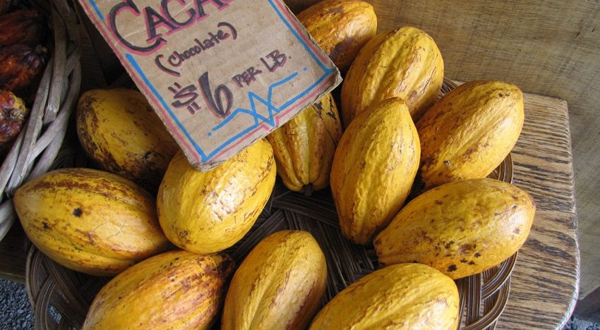 Why cacao is good for you