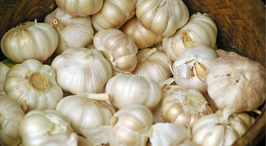 Here's why you should be eating moregarlic